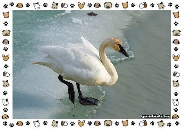 Виды-больших-птиц-названия-описание-и-среда-обитания-18