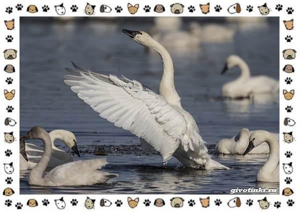 Виды-больших-птиц-названия-описание-и-среда-обитания-19
