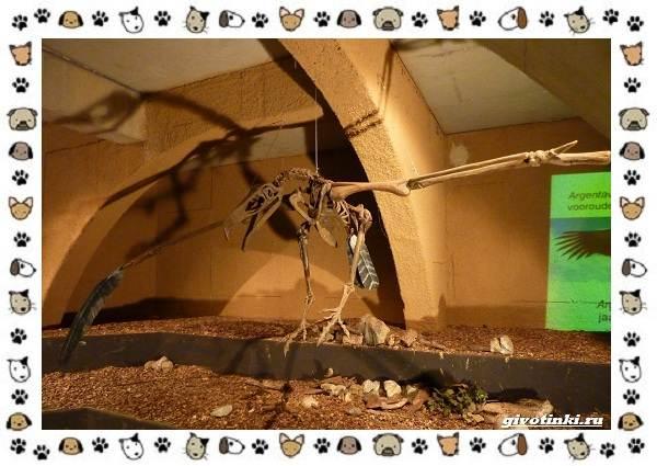 Виды-больших-птиц-названия-описание-и-среда-обитания-2
