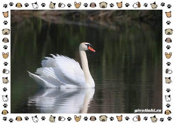 Виды-больших-птиц-названия-описание-и-среда-обитания-20