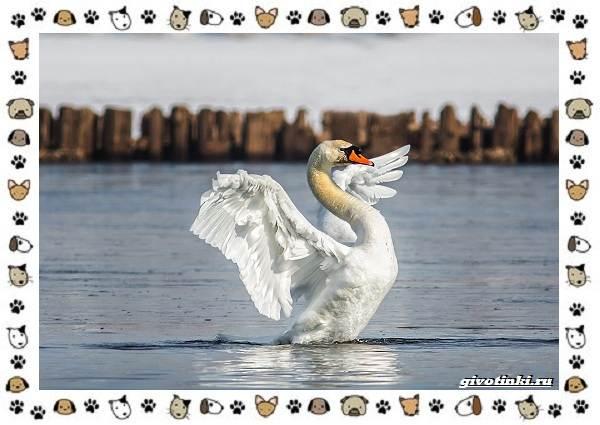 Виды-больших-птиц-названия-описание-и-среда-обитания-21