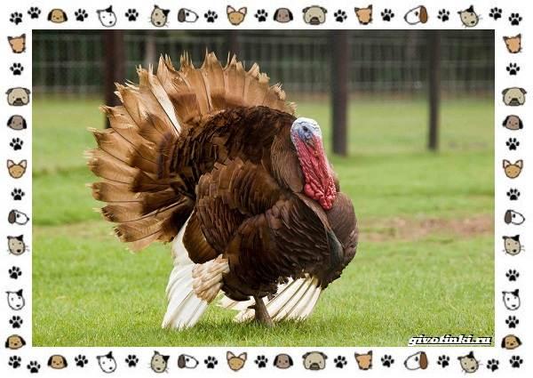 Виды-больших-птиц-названия-описание-и-среда-обитания-22