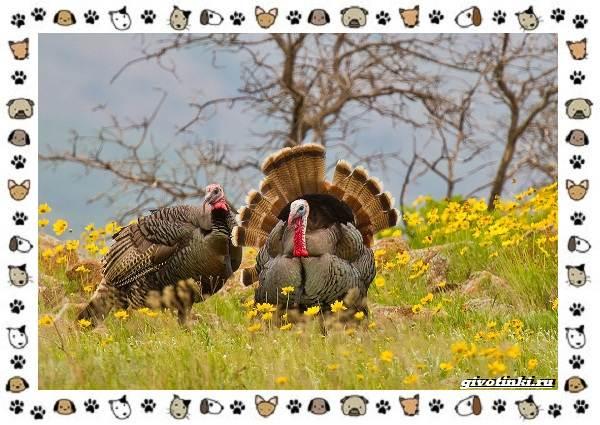Виды-больших-птиц-названия-описание-и-среда-обитания-23