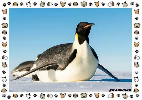 Виды-больших-птиц-названия-описание-и-среда-обитания-25