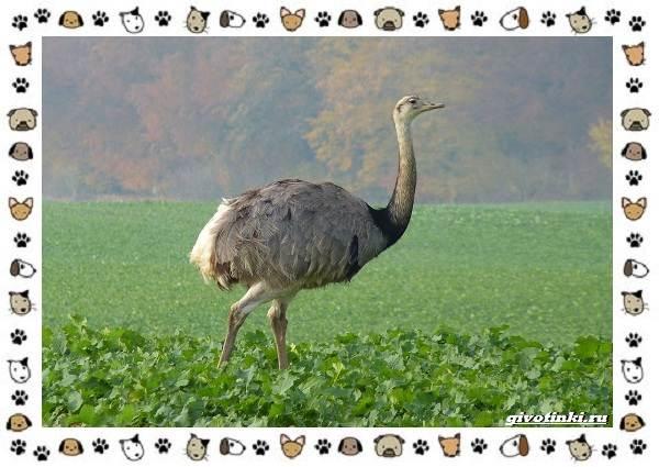 Виды-больших-птиц-названия-описание-и-среда-обитания-26