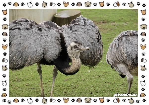 Виды-больших-птиц-названия-описание-и-среда-обитания-27
