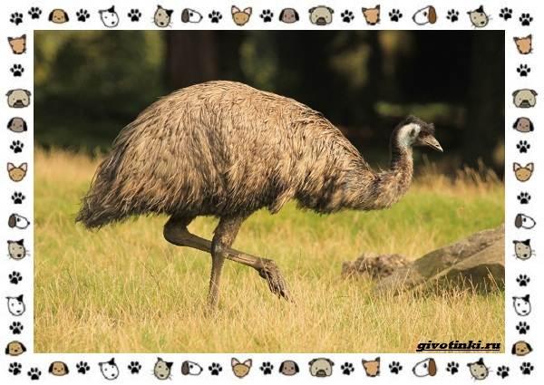 Виды-больших-птиц-названия-описание-и-среда-обитания-29