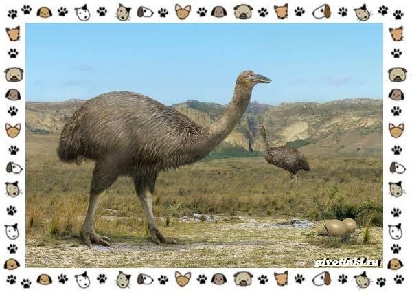 Виды-больших-птиц-названия-описание-и-среда-обитания-3