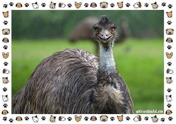 Виды-больших-птиц-названия-описание-и-среда-обитания-30