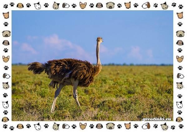 Виды-больших-птиц-названия-описание-и-среда-обитания-33