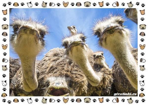 Виды-больших-птиц-названия-описание-и-среда-обитания-34