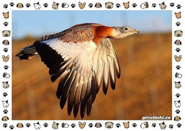 Виды-больших-птиц-названия-описание-и-среда-обитания-5
