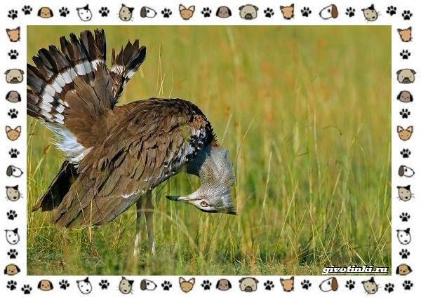 Виды-больших-птиц-названия-описание-и-среда-обитания-6