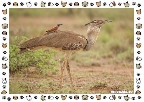 Виды-больших-птиц-названия-описание-и-среда-обитания-7