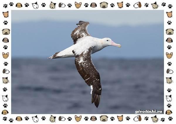 Виды-больших-птиц-названия-описание-и-среда-обитания-8