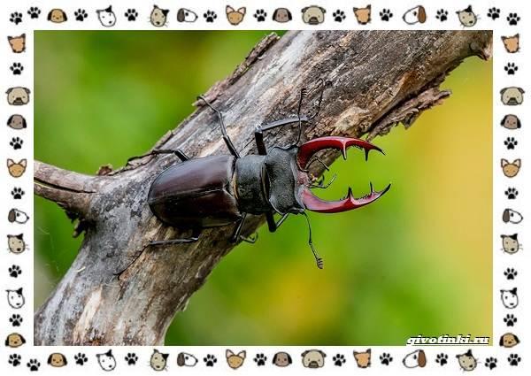 Виды-больших-жуков-стоит-ли-их-бояться-1