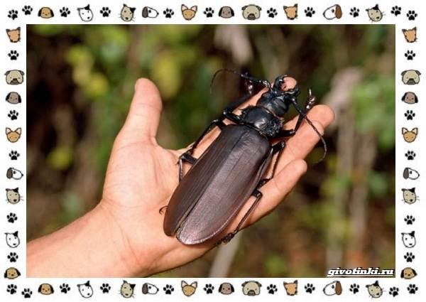 Виды-больших-жуков-стоит-ли-их-бояться-10