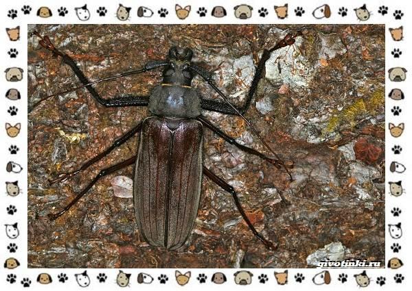Виды-больших-жуков-стоит-ли-их-бояться-11