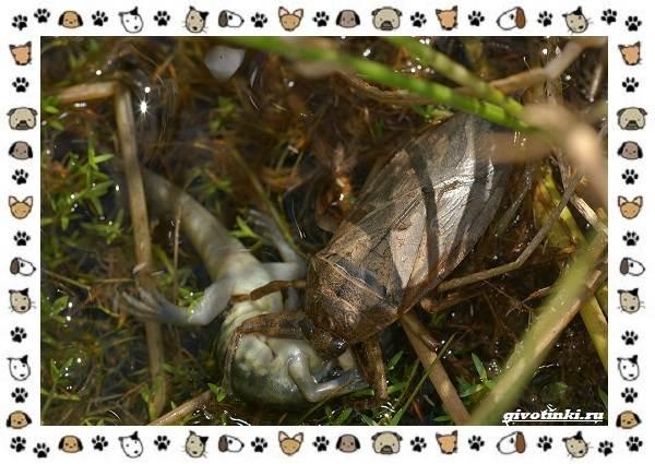Виды-больших-жуков-стоит-ли-их-бояться-13