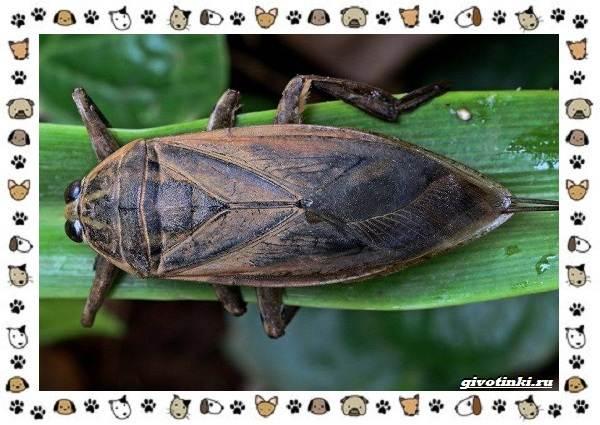 Виды-больших-жуков-стоит-ли-их-бояться-14