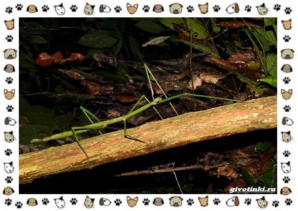 Виды-больших-жуков-стоит-ли-их-бояться-15