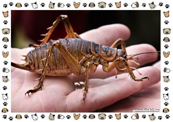 Виды-больших-жуков-стоит-ли-их-бояться-17