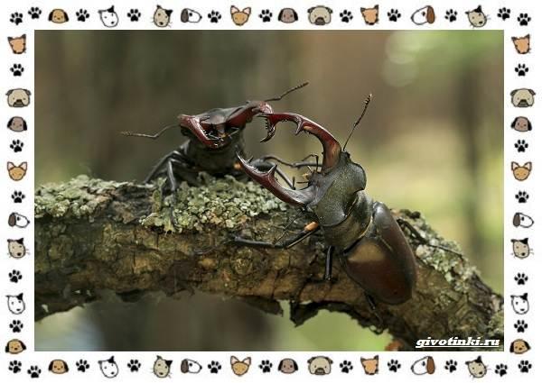 Виды-больших-жуков-стоит-ли-их-бояться-2