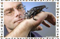 Виды больших жуков: стоит ли их бояться?