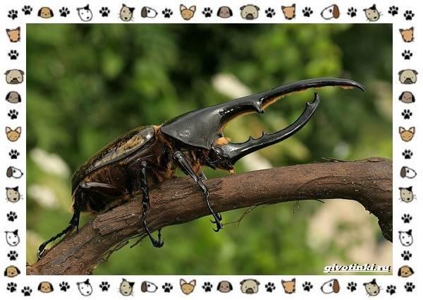 Виды-больших-жуков-стоит-ли-их-бояться-3