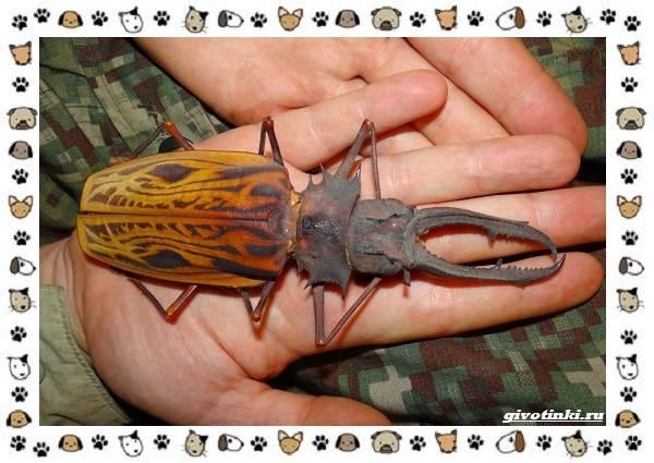 Виды-больших-жуков-стоит-ли-их-бояться-5