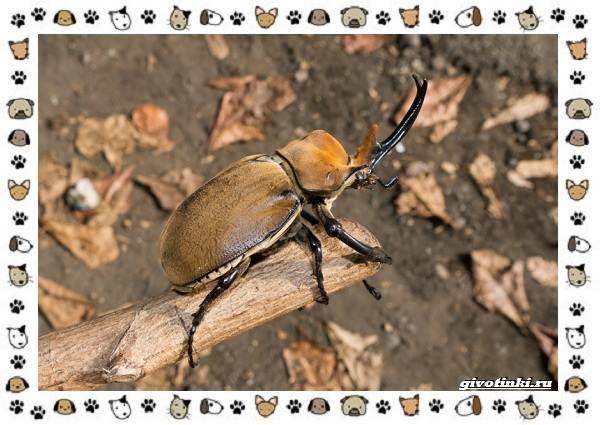 Виды-больших-жуков-стоит-ли-их-бояться-8