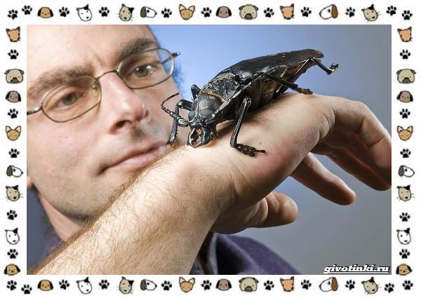 Виды-больших-жуков-стоит-ли-их-бояться