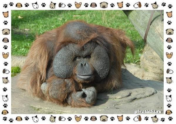 Виды-обезьян-так-ли-они-на-нас-похожи-10