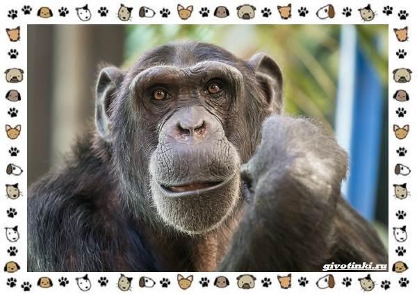 Виды-обезьян-так-ли-они-на-нас-похожи-14