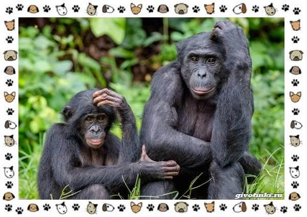 Виды-обезьян-так-ли-они-на-нас-похожи-15