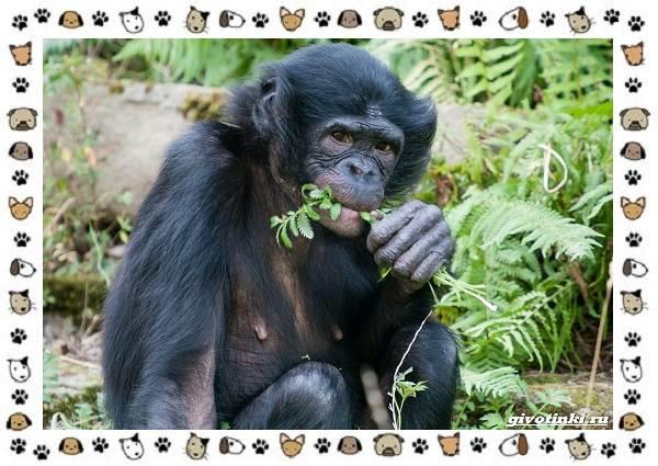 Виды-обезьян-так-ли-они-на-нас-похожи-16