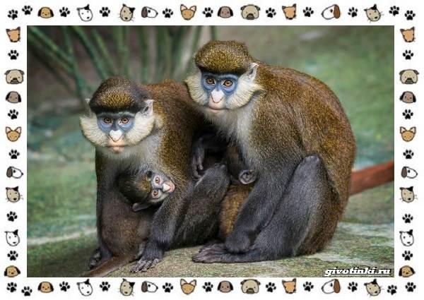 Виды-обезьян-так-ли-они-на-нас-похожи-17