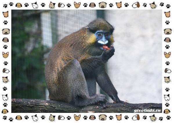Виды-обезьян-так-ли-они-на-нас-похожи-18