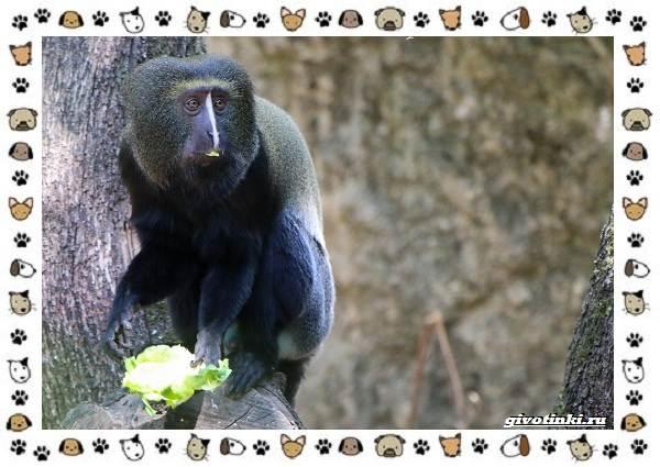 Виды-обезьян-так-ли-они-на-нас-похожи-19