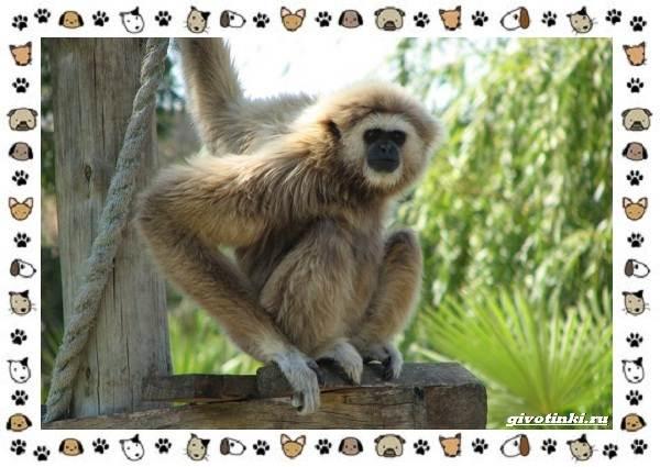 Виды-обезьян-так-ли-они-на-нас-похожи-2
