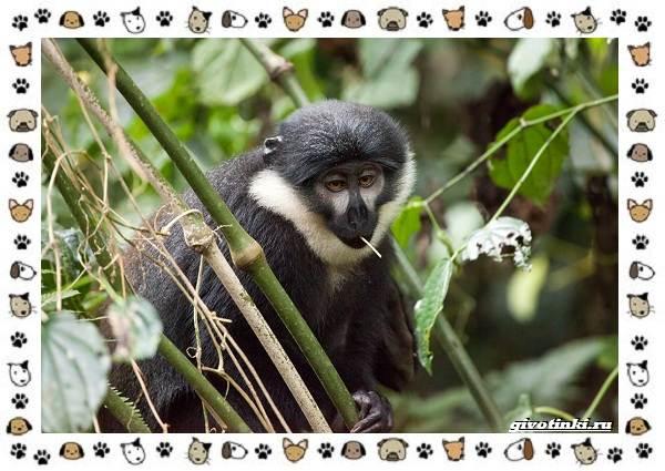 Виды-обезьян-так-ли-они-на-нас-похожи-20
