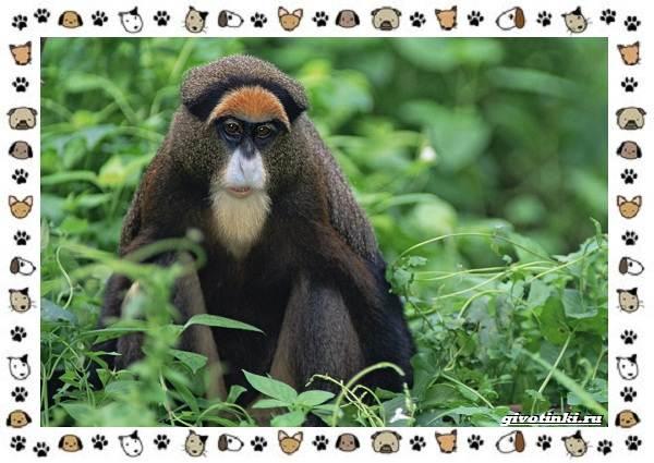 Виды-обезьян-так-ли-они-на-нас-похожи-21