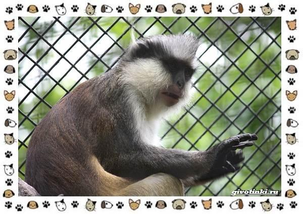 Виды-обезьян-так-ли-они-на-нас-похожи-22