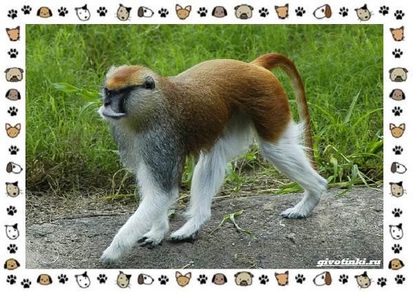 Виды-обезьян-так-ли-они-на-нас-похожи-23