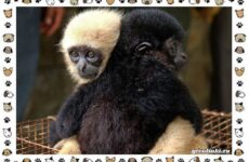 Виды обезьян: так ли они на нас похожи?