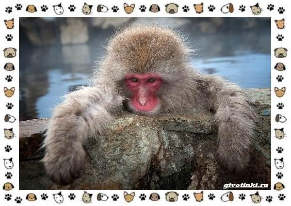 Виды-обезьян-так-ли-они-на-нас-похожи-24