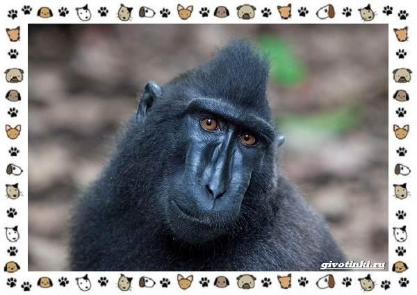 Виды-обезьян-так-ли-они-на-нас-похожи-28