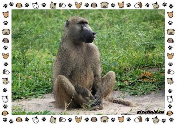 Виды-обезьян-так-ли-они-на-нас-похожи-29