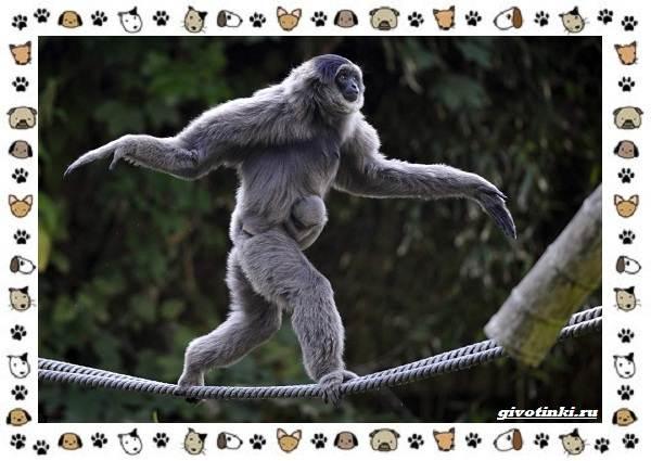 Виды-обезьян-так-ли-они-на-нас-похожи-3
