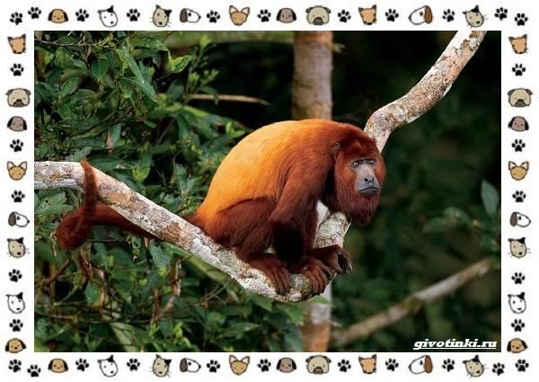 Виды-обезьян-так-ли-они-на-нас-похожи-33